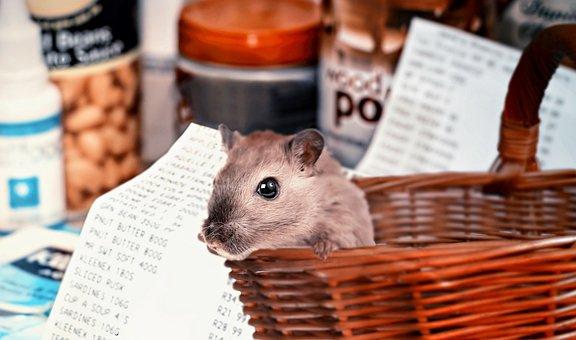 仓鼠购物, Covid-19, 购买仓鼠, 采购, 购物篮, 仓鼠, 购买