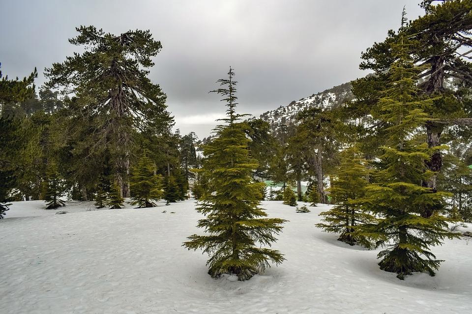 Trees, Mountain, Snow, Winter, Nature, Landscape