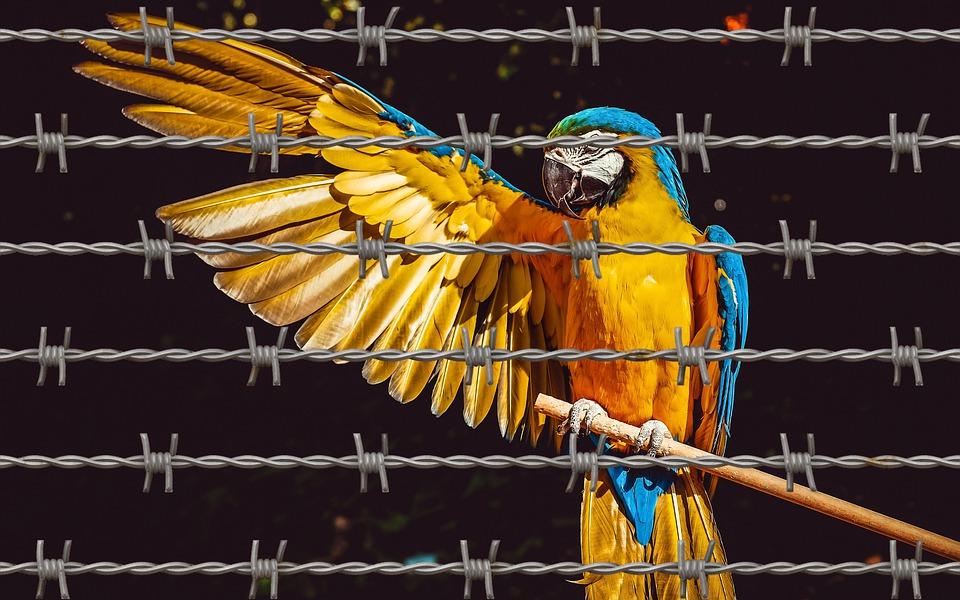 Ara, Papuga, Zwierząt, Siatki, Sieci, Więzienie