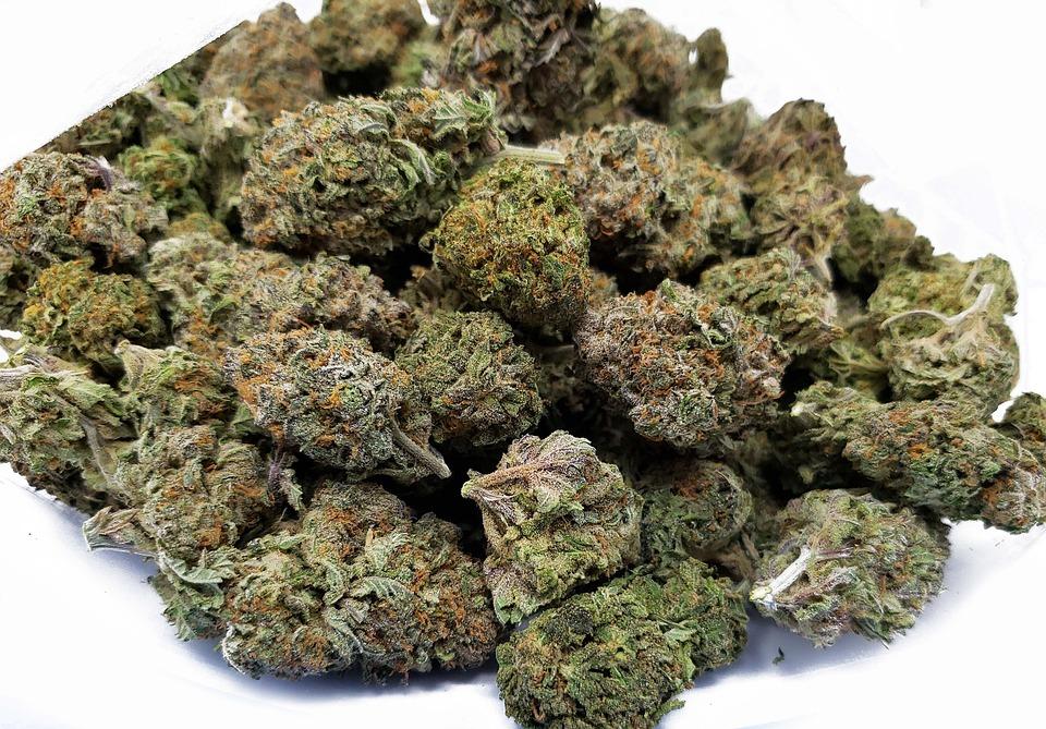 Zwart Nuken, Bc ' S Meest Beruchte Cannabissoort