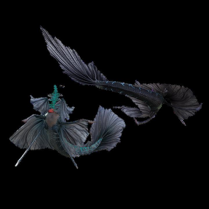 Mermaid Tail Costume Free Image On Pixabay