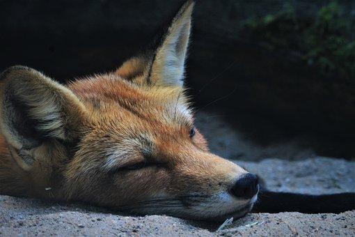 Pourquoi suis-je si fatigué ? Les nombreuses causes de la fatigue