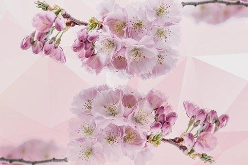 樱花, 花瓣, 性质, 树, 春天, 盛开, 开花, 关闭, 粉彩, 浪漫