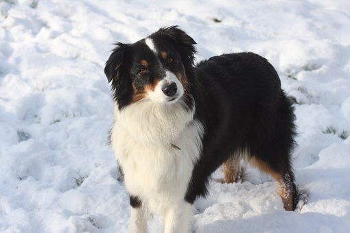 dog-in-the-snow-4955661__340.jpg