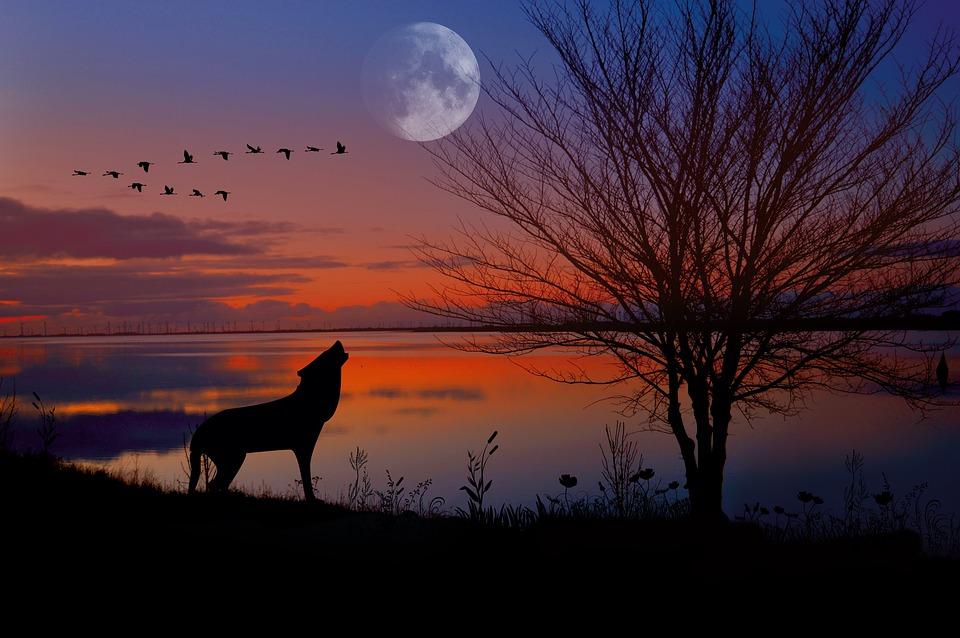 Sunset, Evening Atmosphere, Wolf, Dog, Moon, Landscape