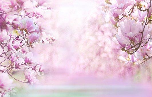 Natur, Landschaft, Magnolie, Magnolia