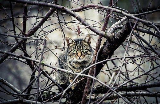 Cat, Cat In The Tree, Animal, Climb, Pet