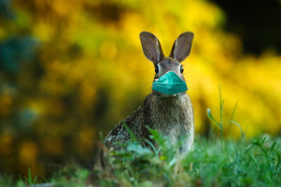 Pasqua, Virus, Maschera, Easter Bunny, Lepre Corona