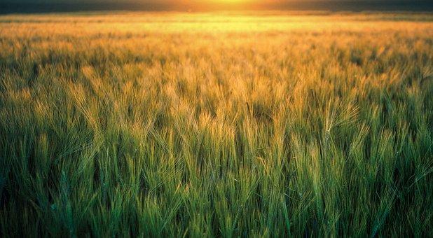 2020年农民务农时应该注意哪些问题?