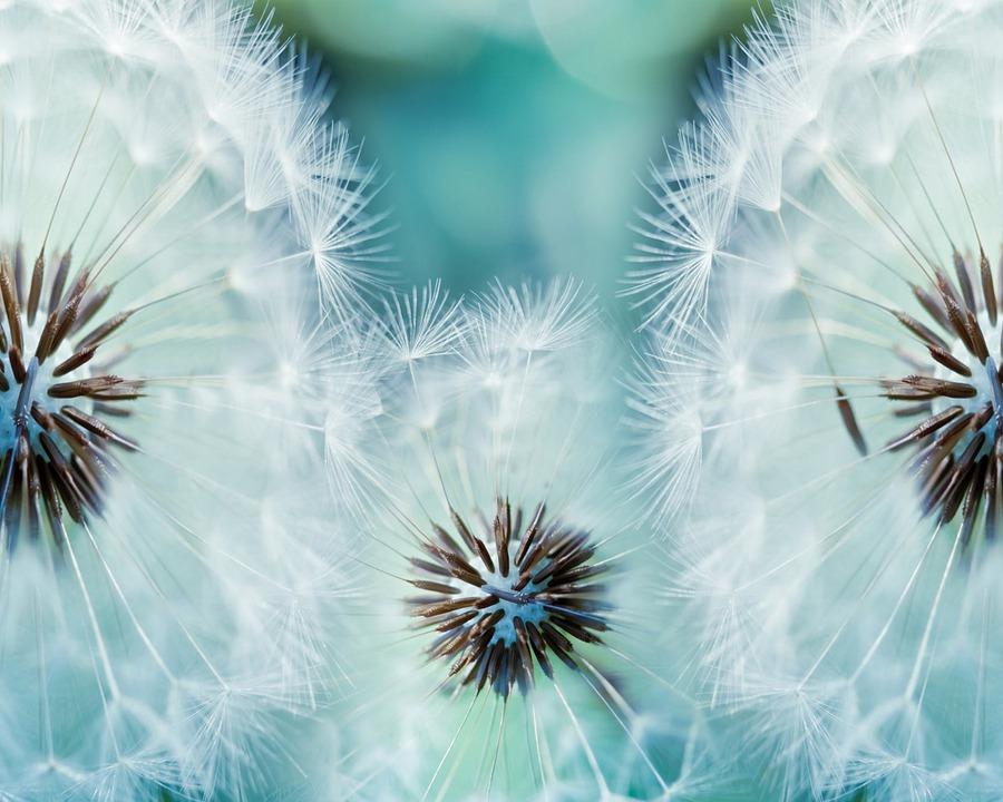Bunga Dandelion Makro Musim Gambar Gratis Di Pixabay