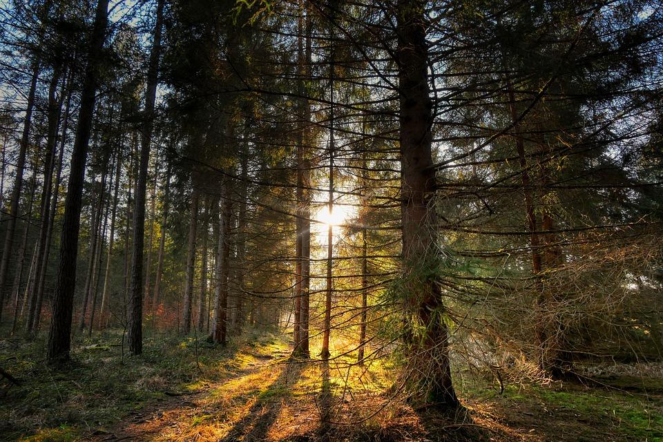 forest-4970147_960_720.jpg