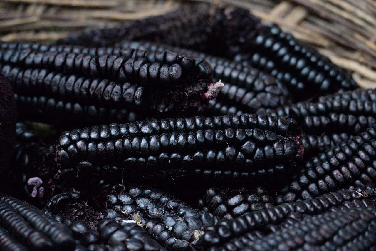 Black Corn Food Nature - Free photo on Pixabay