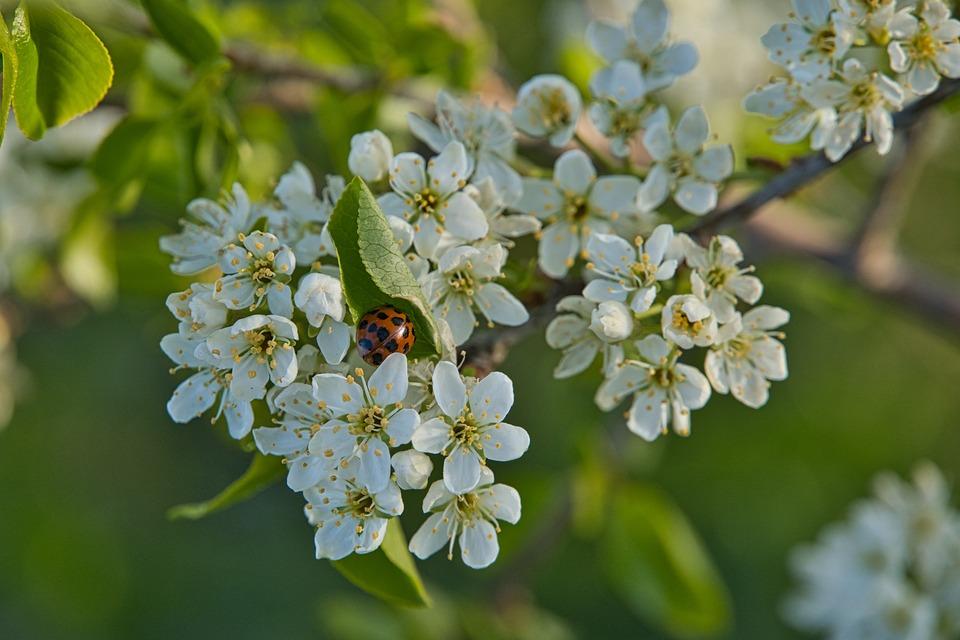 Цветы, Буш, Весна, Природы, Цветение, Завод, Закрывать