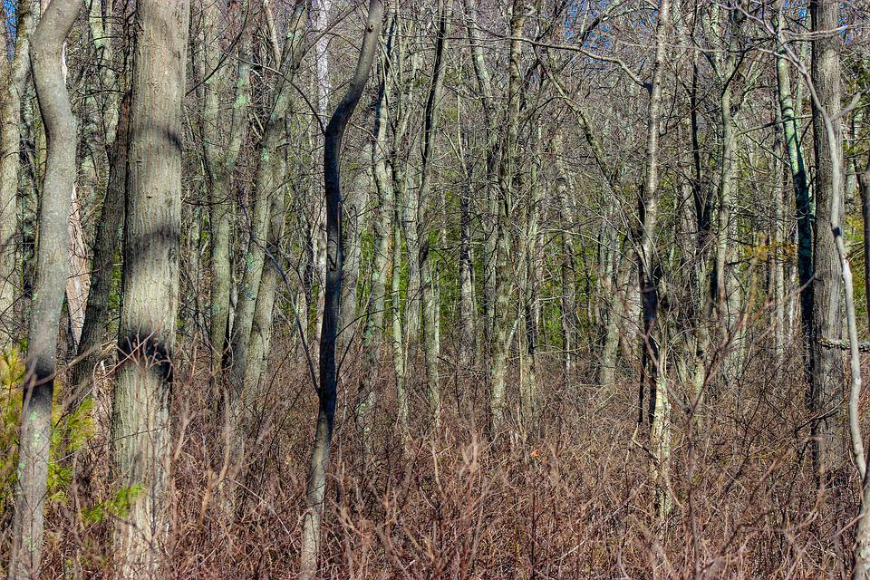 Forest, Autumn, Trees, Leaves, Fall, Branches, Dense