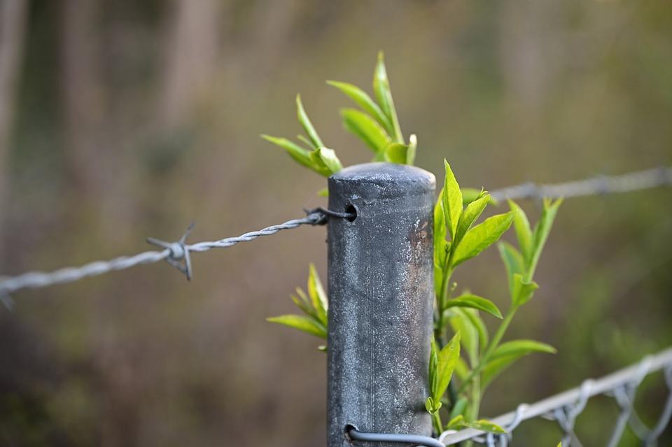 フェンス, 禁止, 保護, 罫線, セキュリティ, 線, クローズ, 金属