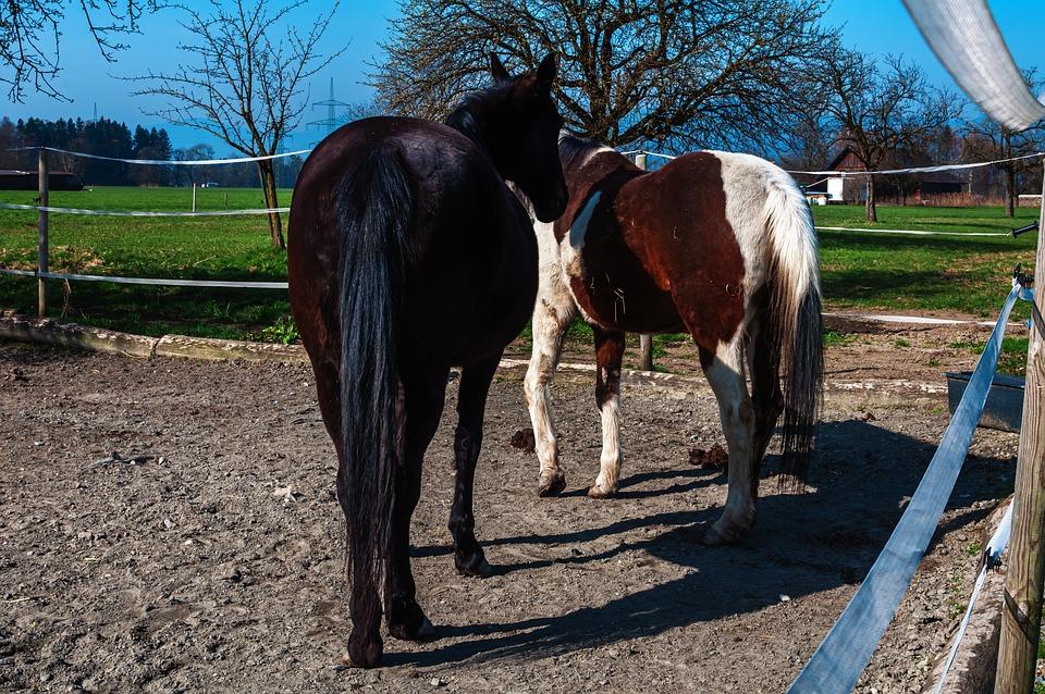 Horse Pictures, Sky, Landscape, Horse Size