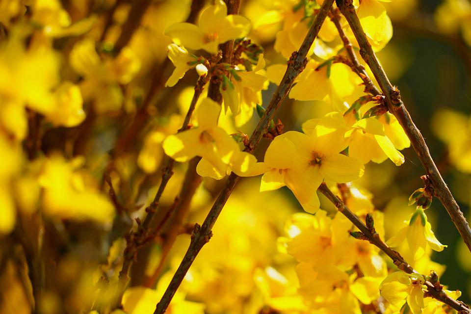 Blossom Bloom Yellow Free Photo On Pixabay