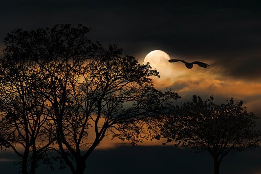 Hintergrund, Natur, Mondschein, Emotion