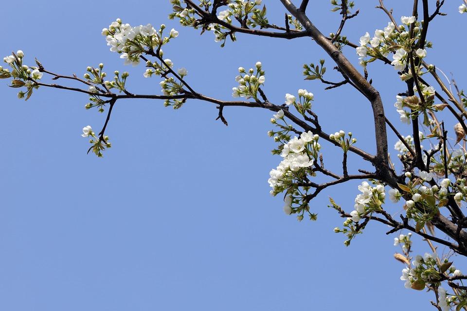 Forår, Blomster, Træ, Natur, Plant, Sky, Have, Petal