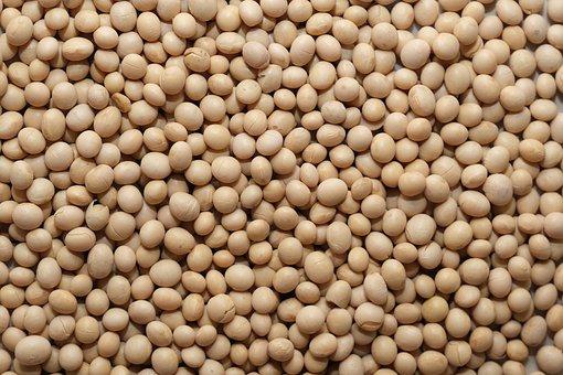 Soy Bean, Vegan, Healthy, Brown Healthy
