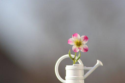 Décor de jardin : Choisir et utiliser les accessoires de jardin