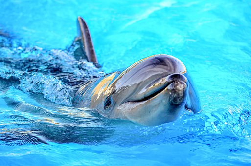 swim with dolphins in Jamaica