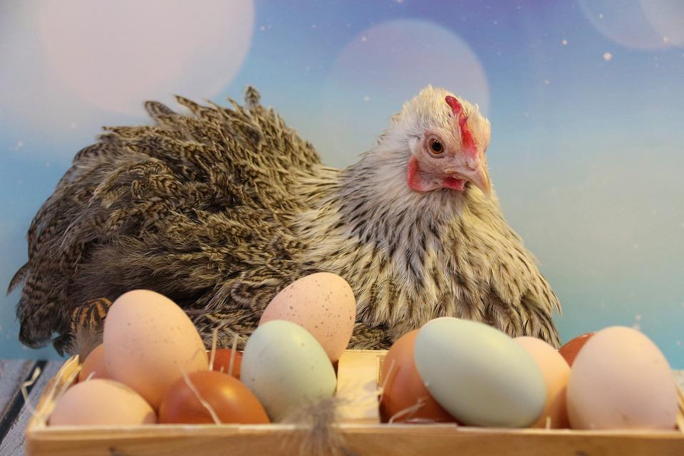 Easter Egg Eggs - Free photo on Pixabay