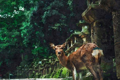Rusa, Dari, Nara, Margasatwa, Alam
