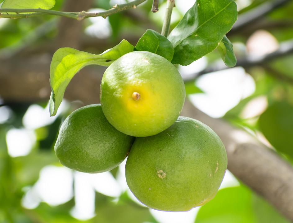 Lemon, Fruit, Yellow, Lemons, Lime, Citrus, Fresh