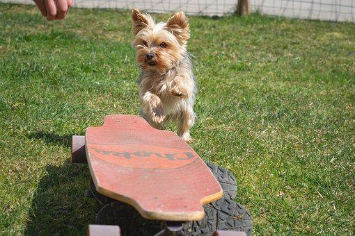 Teacup Yorkie Puppies for sale in Ohio