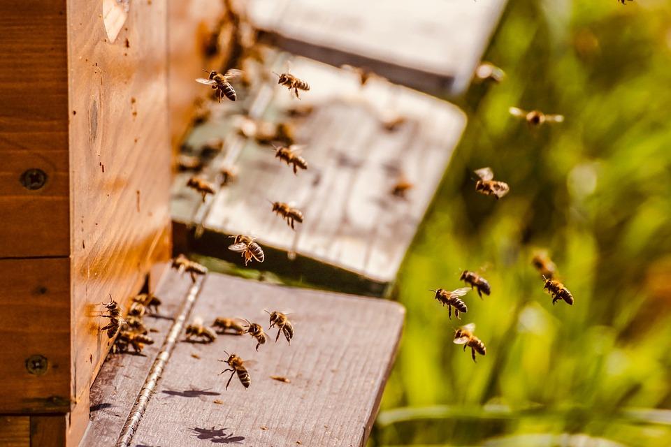Bienenstock, Bienenvolk, Honigbienen, Bienen