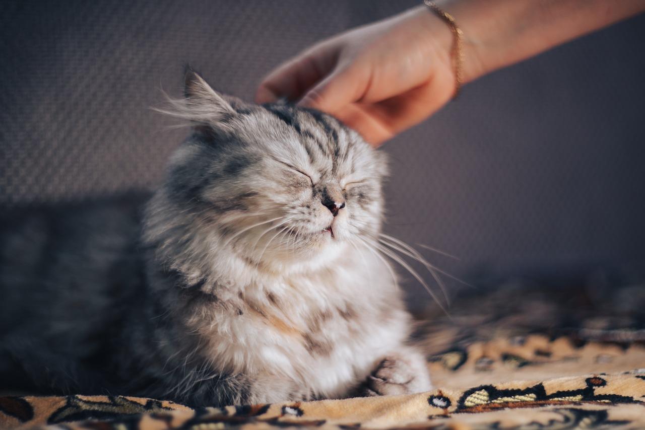 gato nao quer comer e está triste o que fazer