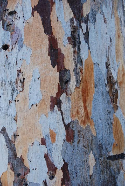 Tree Wood Bark Free Photo On Pixabay