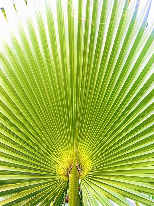 Paume Feuilles Nature - Photo gratuite sur Pixabay