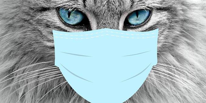 Corona, Cat, Pet, Kitten, Mask, Pandemic