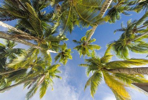Árboles, Verano, Playa, Naturaleza