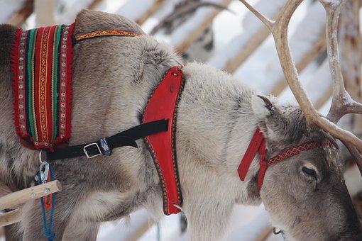 Renna, Babbo Natale, Rovaniemi
