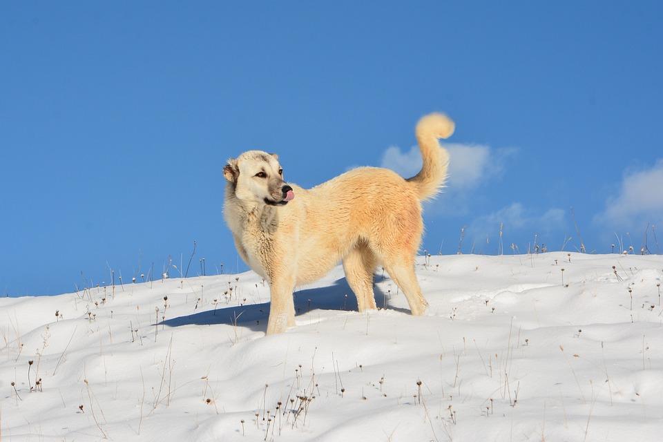 Jak dbać o łapy psa zimą?