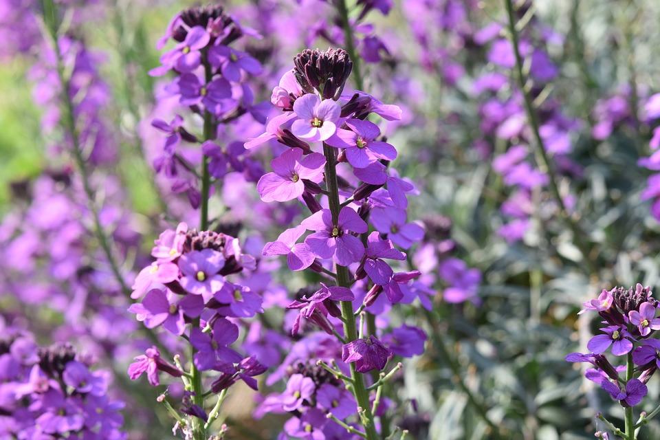 Bunga Tanaman Warna Ungu Foto Gratis Di Pixabay