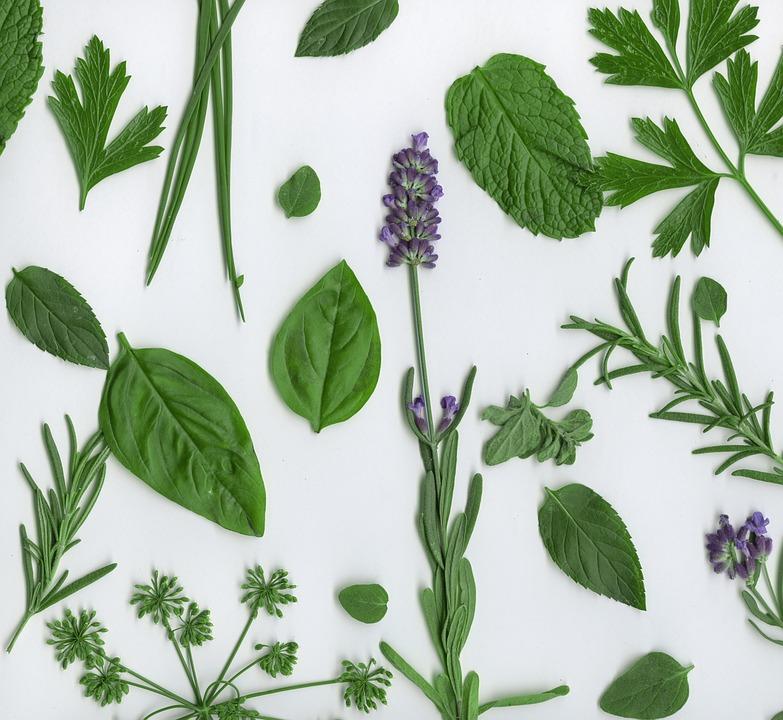 Parsley, Herbs, Italian Parsley, Lavendar, Basil