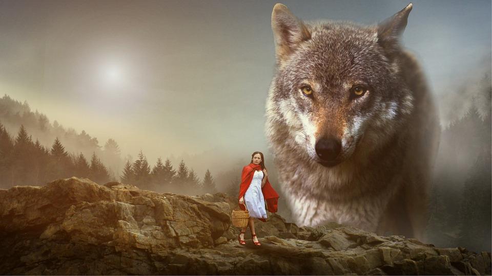 女の子, 赤い帽子, オオカミ, 赤ずきんちゃん, 神話, 森林, 野獣, 褐色森林, 茶色のオオカミ