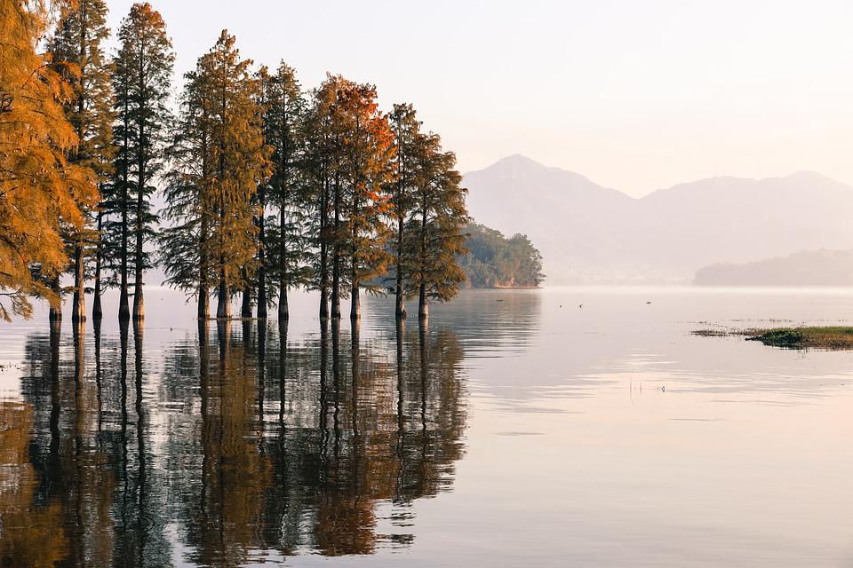 Lake, Forest, Nature, Landscape, Water, River