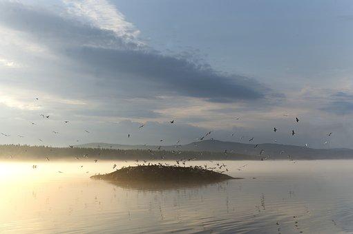 Lake, Water, Nature, Calm, Animals