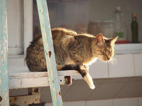 Cat, Rest, Animals, Landscape, Mammal