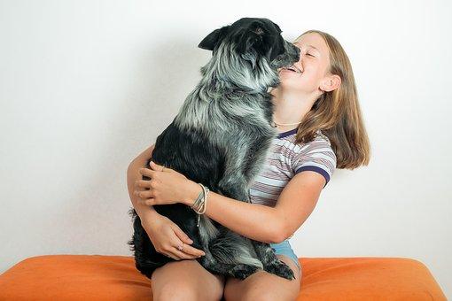 Pet, Dog, Sheep Dog, Girl, Fun, Happy