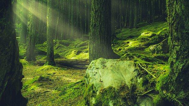 Forest, Green, Lush, Moss, Environment