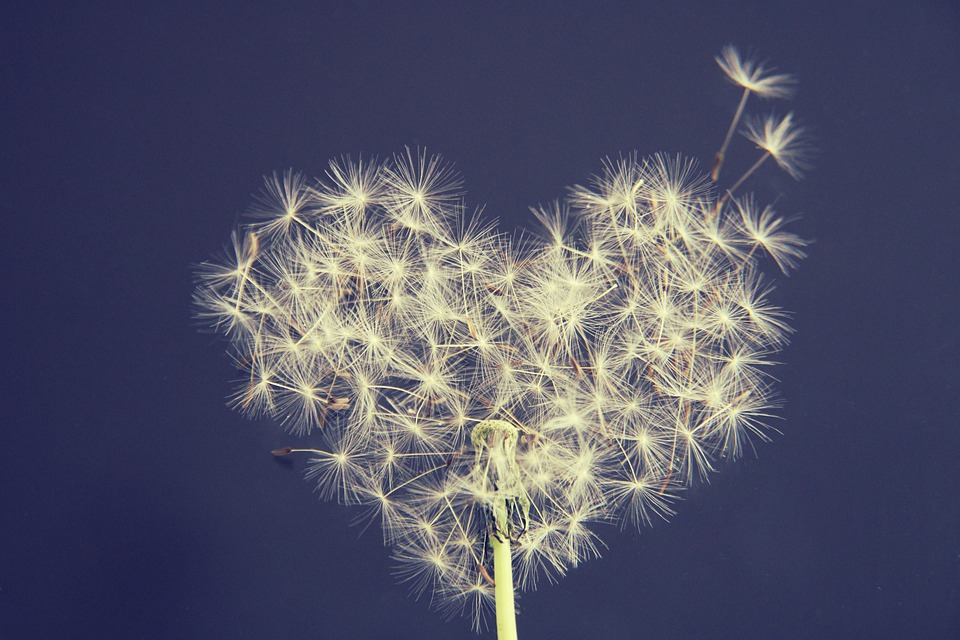 Dandelion, Heart, Wish You, Love, Romance, Romantic