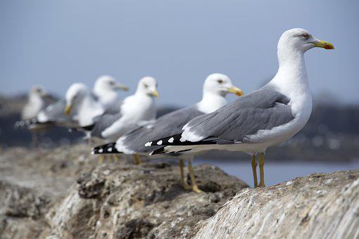 カモメ、行、鳥、環境、鳥
