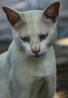 100 Free Persian Cat Cat Images Pixabay