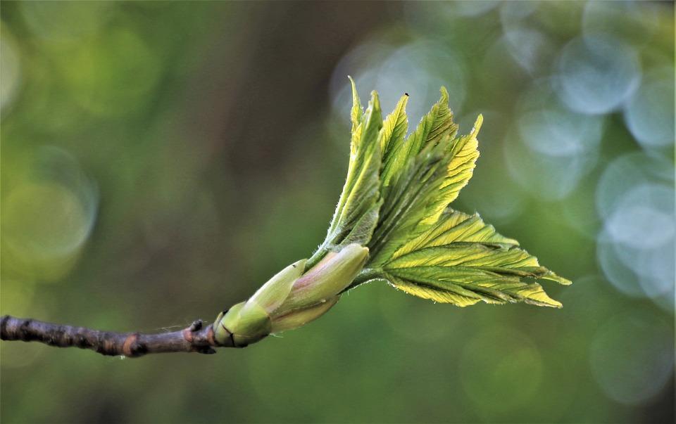 Primavera, Foglia, Fresco, Rostock, Bokeh, Pianta, Eco